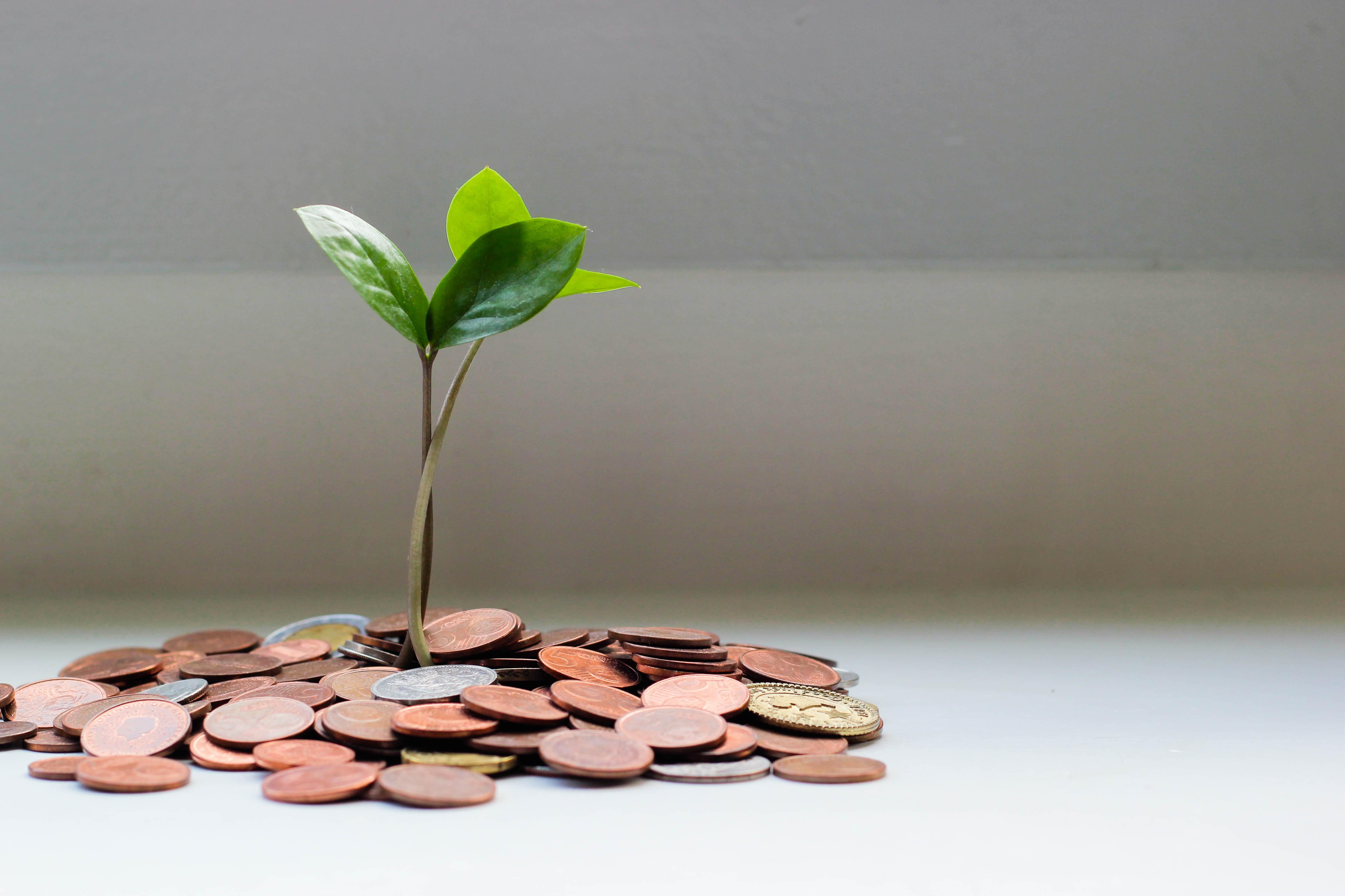 Profitlevel   Které společnosti budou růst díky COVID-19?